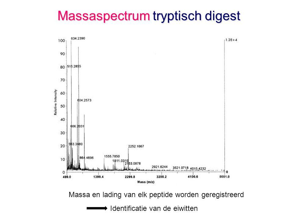 Massaspectrum tryptisch digest Massa en lading van elk peptide worden geregistreerd Identificatie van de eiwitten