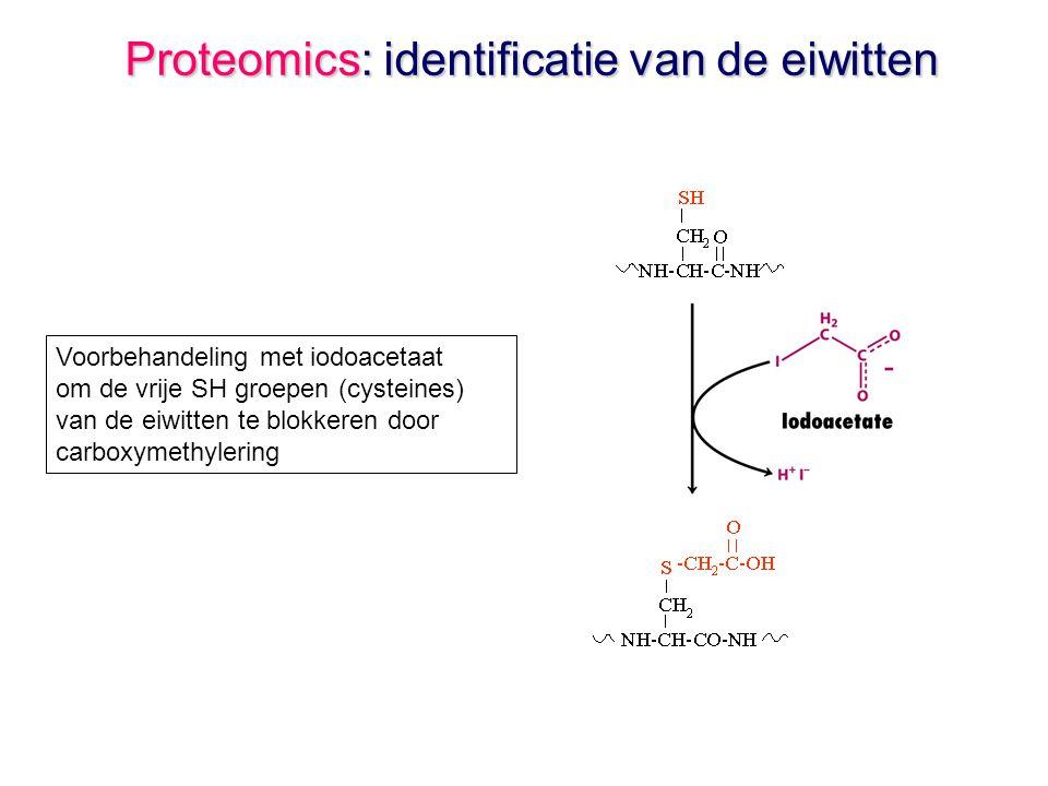 Proteomics: identificatie van de eiwitten Voorbehandeling met iodoacetaat om de vrije SH groepen (cysteines) van de eiwitten te blokkeren door carboxymethylering