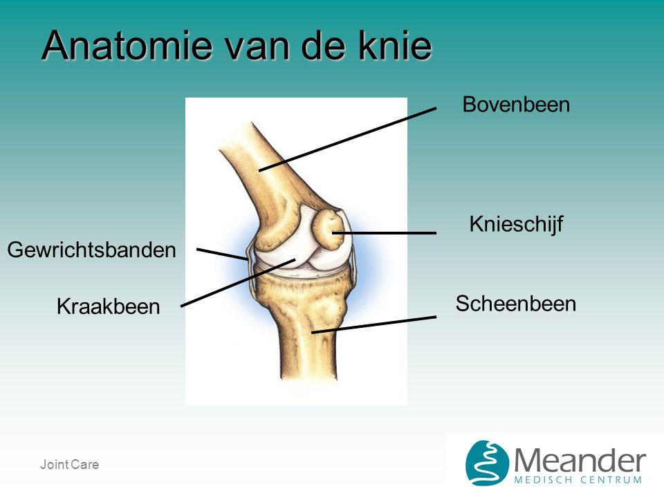 Joint Care Anatomie van de knie Bovenbeen Knieschijf Scheenbeen Gewrichtsbanden Kraakbeen