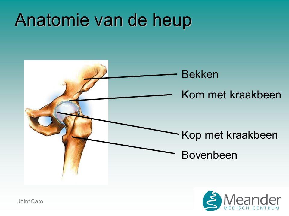 Joint Care Anatomie van de heup Bekken Kom met kraakbeen Kop met kraakbeen Bovenbeen