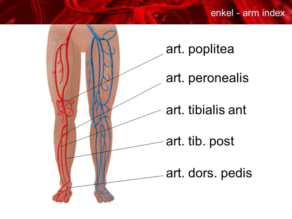 art. poplitea art. peronealis art. tibialis ant art. dors. pedis art. tib. post enkel - arm index