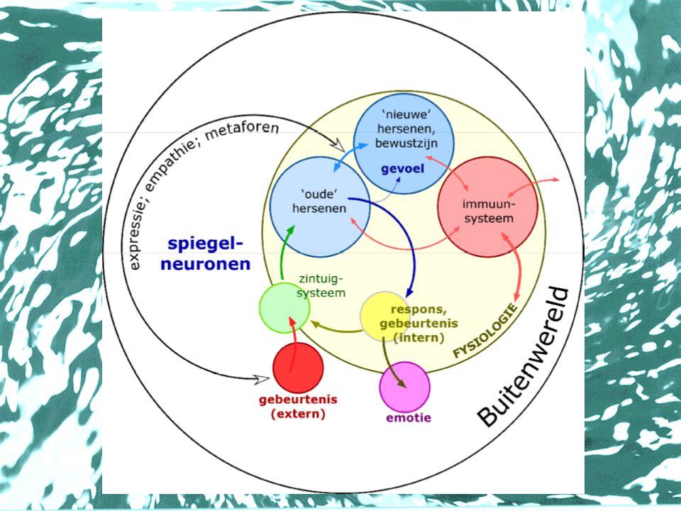 Belangrijke factoren •Omgaan met stress •Lichaamsbewustzijn •Expressiemogelijkheden (o.a.