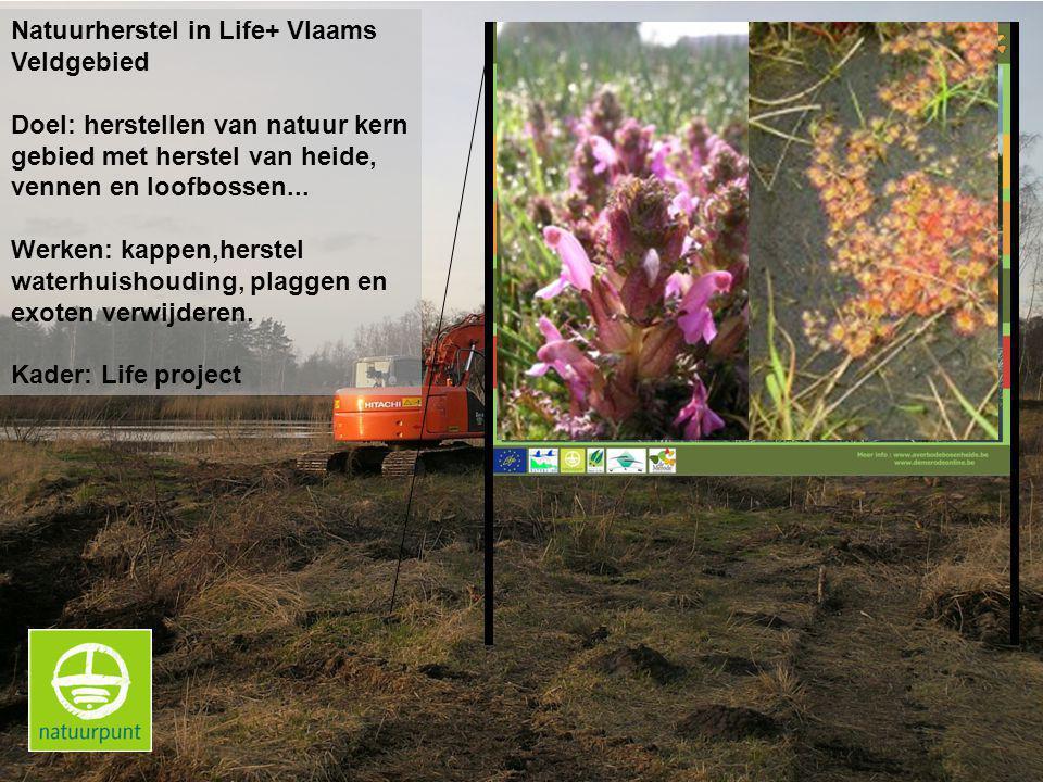 Natuurherstel in Life+ Vlaams Veldgebied Doel: herstellen van natuur kern gebied met herstel van heide, vennen en loofbossen...