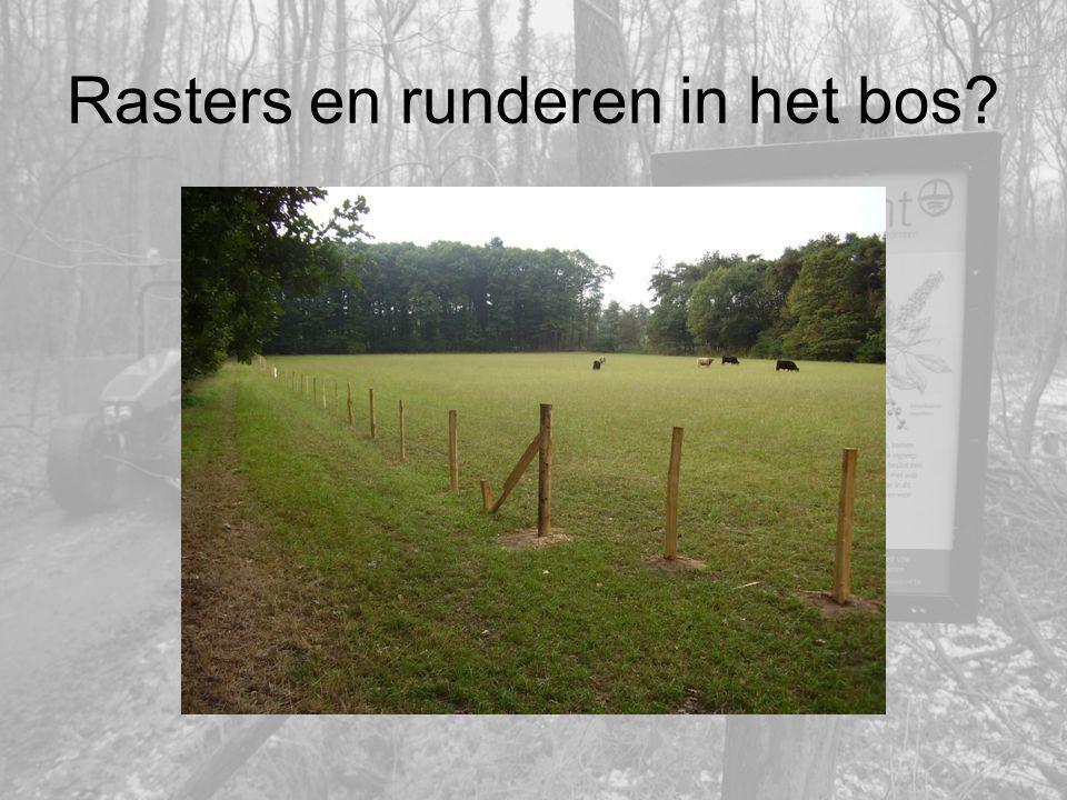 Rasters en runderen in het bos?