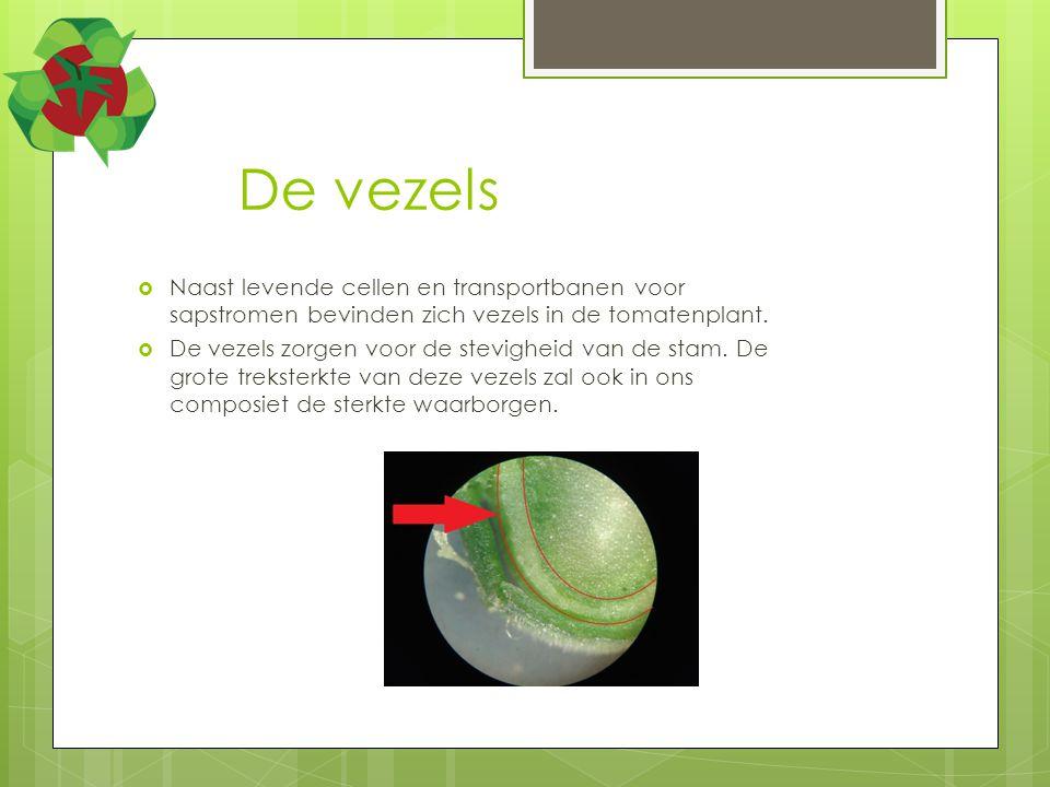 Hoe worden de vezels verkregen  In de celwand van de plant bevind zich pectine.