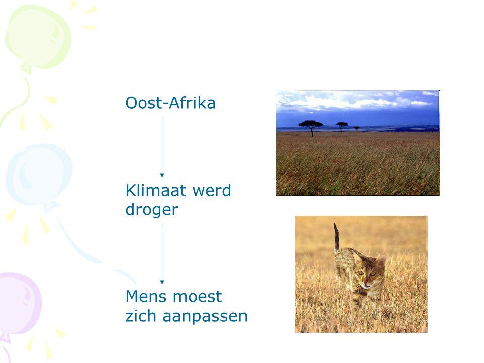 Oost-Afrika Klimaat werd droger Mens moest zich aanpassen