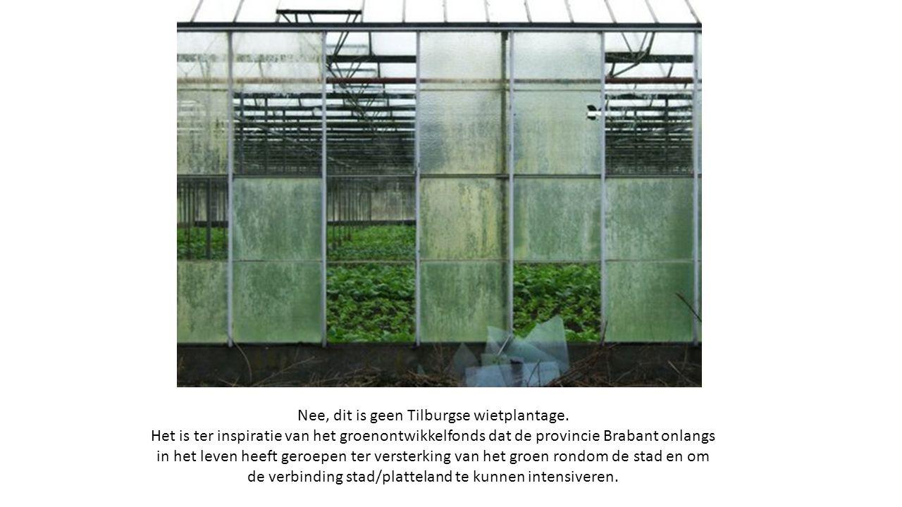 Nee, dit is geen Tilburgse wietplantage.