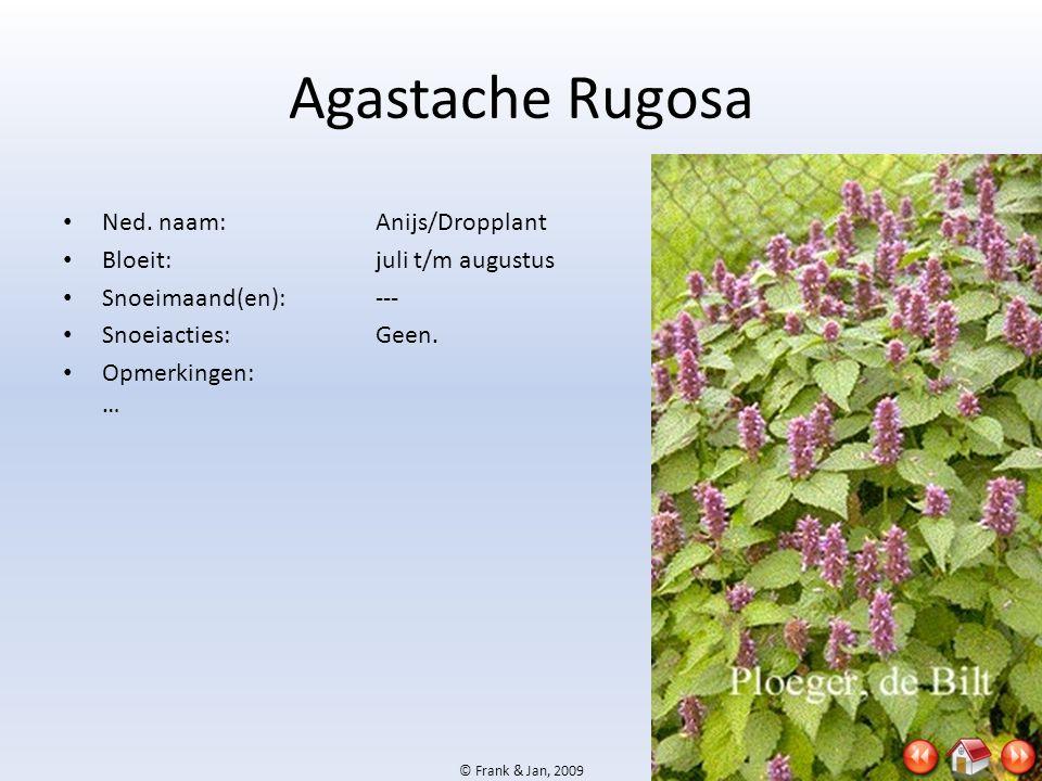 © Frank & Jan, 2009 Agastache Rugosa • Ned. naam:Anijs/Dropplant • Bloeit:juli t/m augustus • Snoeimaand(en):--- • Snoeiacties:Geen. • Opmerkingen: …