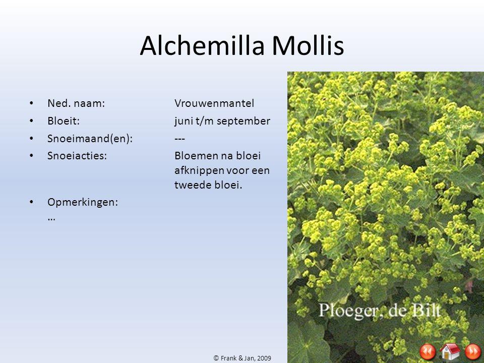 © Frank & Jan, 2009 Alchemilla Mollis • Ned. naam:Vrouwenmantel • Bloeit:juni t/m september • Snoeimaand(en):--- • Snoeiacties:Bloemen na bloei afknip