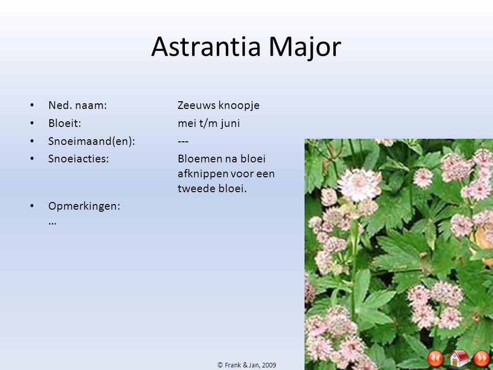© Frank & Jan, 2009 Astrantia Major • Ned. naam:Zeeuws knoopje • Bloeit:mei t/m juni • Snoeimaand(en):--- • Snoeiacties:Bloemen na bloei afknippen voo