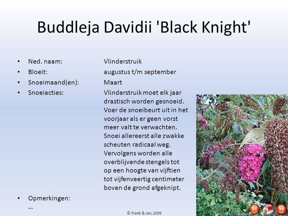 © Frank & Jan, 2009 Buddleja Davidii 'Black Knight' • Ned. naam:Vlinderstruik • Bloeit:augustus t/m september • Snoeimaand(en):Maart • Snoeiacties:Vli
