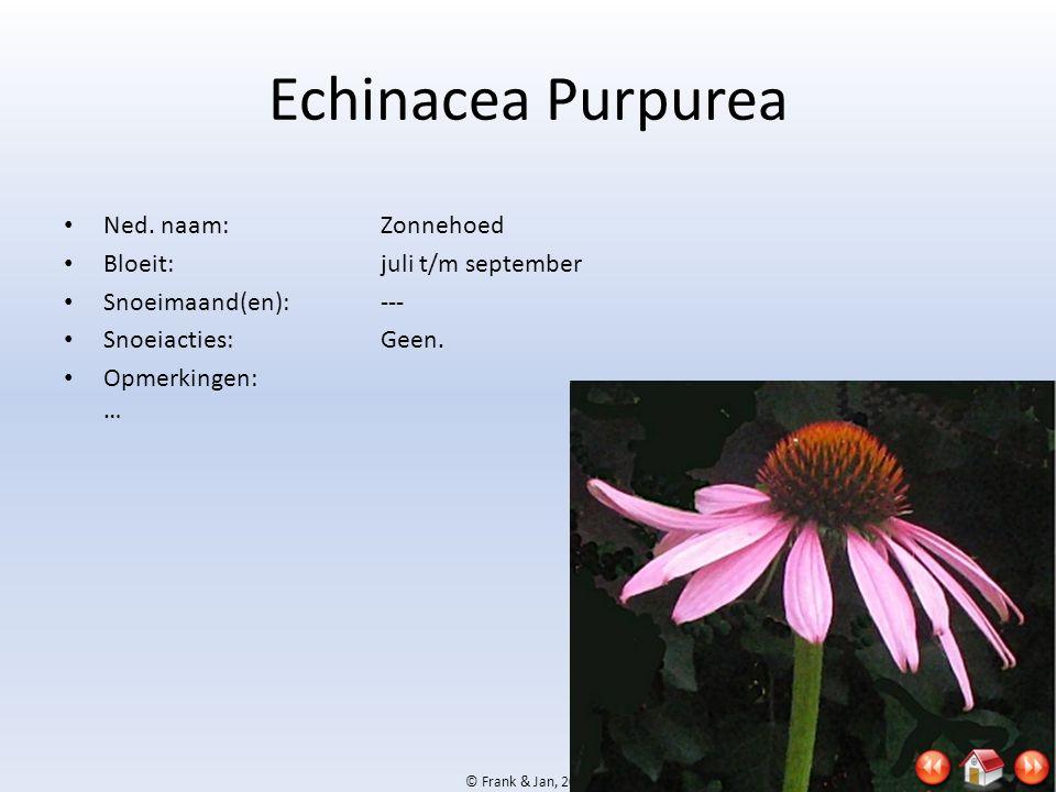 © Frank & Jan, 2009 Echinacea Purpurea • Ned. naam:Zonnehoed • Bloeit:juli t/m september • Snoeimaand(en):--- • Snoeiacties:Geen. • Opmerkingen: …