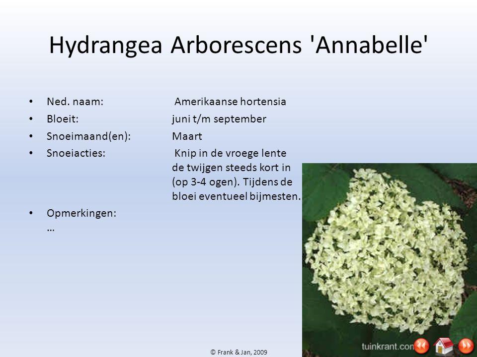 © Frank & Jan, 2009 Hydrangea Arborescens 'Annabelle' • Ned. naam: Amerikaanse hortensia • Bloeit:juni t/m september • Snoeimaand(en):Maart • Snoeiact
