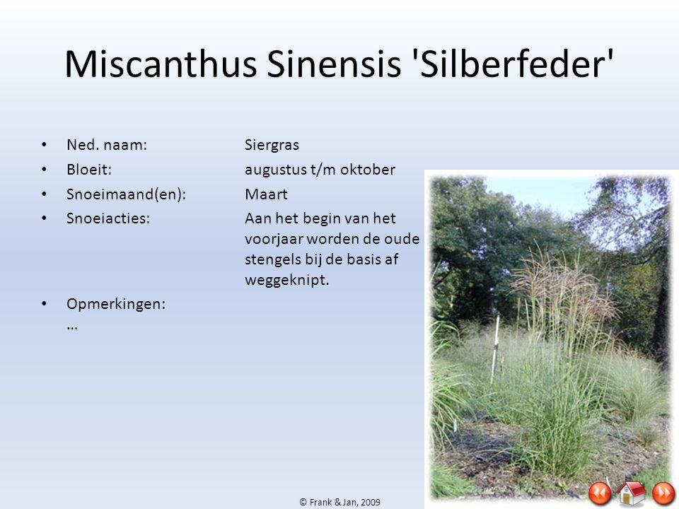 © Frank & Jan, 2009 Miscanthus Sinensis 'Silberfeder' • Ned. naam:Siergras • Bloeit:augustus t/m oktober • Snoeimaand(en):Maart • Snoeiacties:Aan het