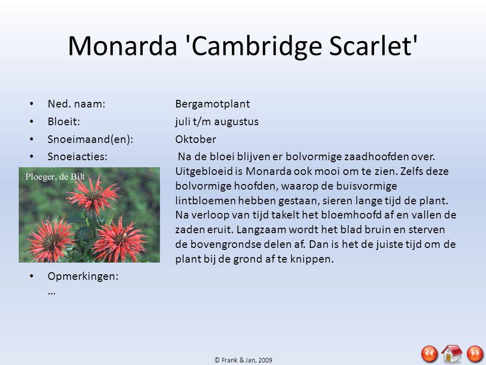 © Frank & Jan, 2009 Monarda 'Cambridge Scarlet' • Ned. naam:Bergamotplant • Bloeit:juli t/m augustus • Snoeimaand(en):Oktober • Snoeiacties: Na de blo