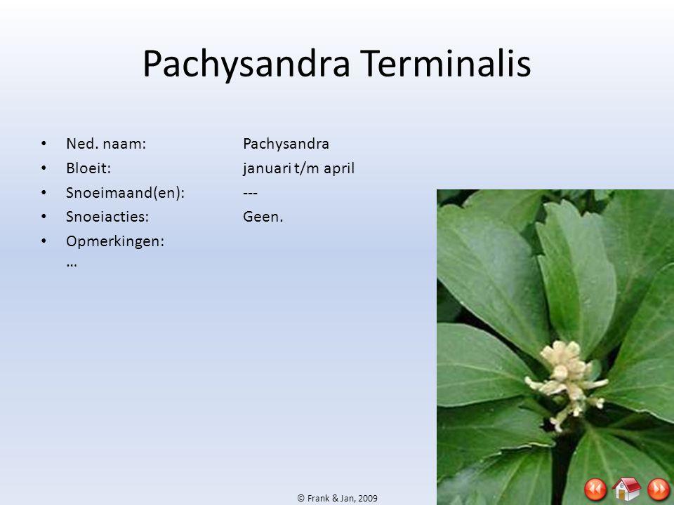 © Frank & Jan, 2009 Pachysandra Terminalis • Ned. naam:Pachysandra • Bloeit:januari t/m april • Snoeimaand(en):--- • Snoeiacties:Geen. • Opmerkingen: