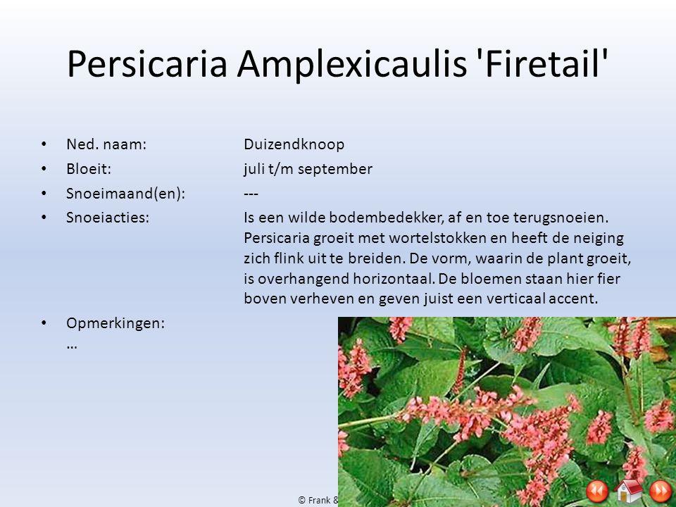 © Frank & Jan, 2009 Persicaria Amplexicaulis 'Firetail' • Ned. naam:Duizendknoop • Bloeit:juli t/m september • Snoeimaand(en):--- • Snoeiacties:Is een