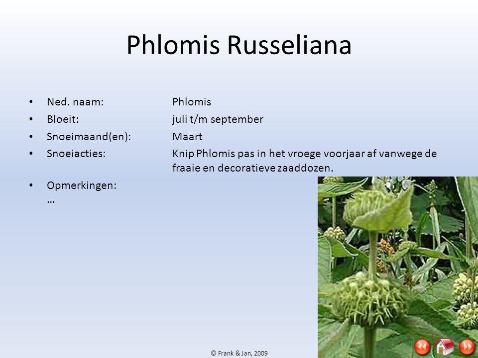 © Frank & Jan, 2009 Phlomis Russeliana • Ned. naam:Phlomis • Bloeit:juli t/m september • Snoeimaand(en):Maart • Snoeiacties:Knip Phlomis pas in het vr