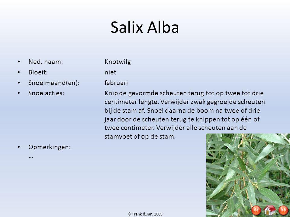 © Frank & Jan, 2009 Salix Alba • Ned. naam:Knotwilg • Bloeit:niet • Snoeimaand(en):februari • Snoeiacties:Knip de gevormde scheuten terug tot op twee
