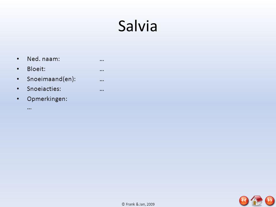 © Frank & Jan, 2009 Salvia • Ned. naam:… • Bloeit:… • Snoeimaand(en):… • Snoeiacties:… • Opmerkingen: …