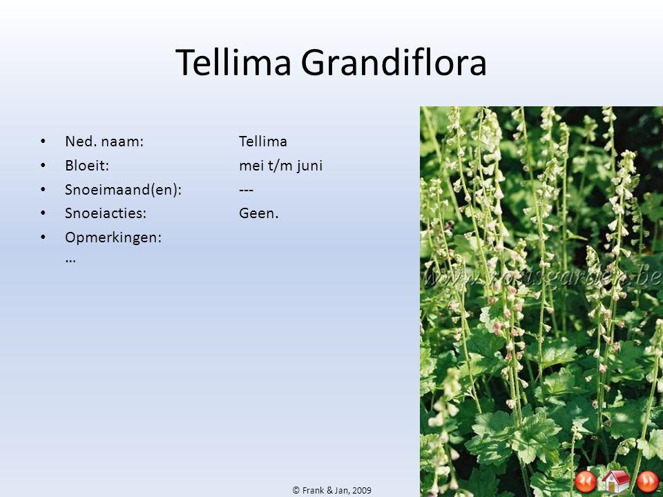 © Frank & Jan, 2009 Tellima Grandiflora • Ned. naam:Tellima • Bloeit:mei t/m juni • Snoeimaand(en):--- • Snoeiacties:Geen. • Opmerkingen: …