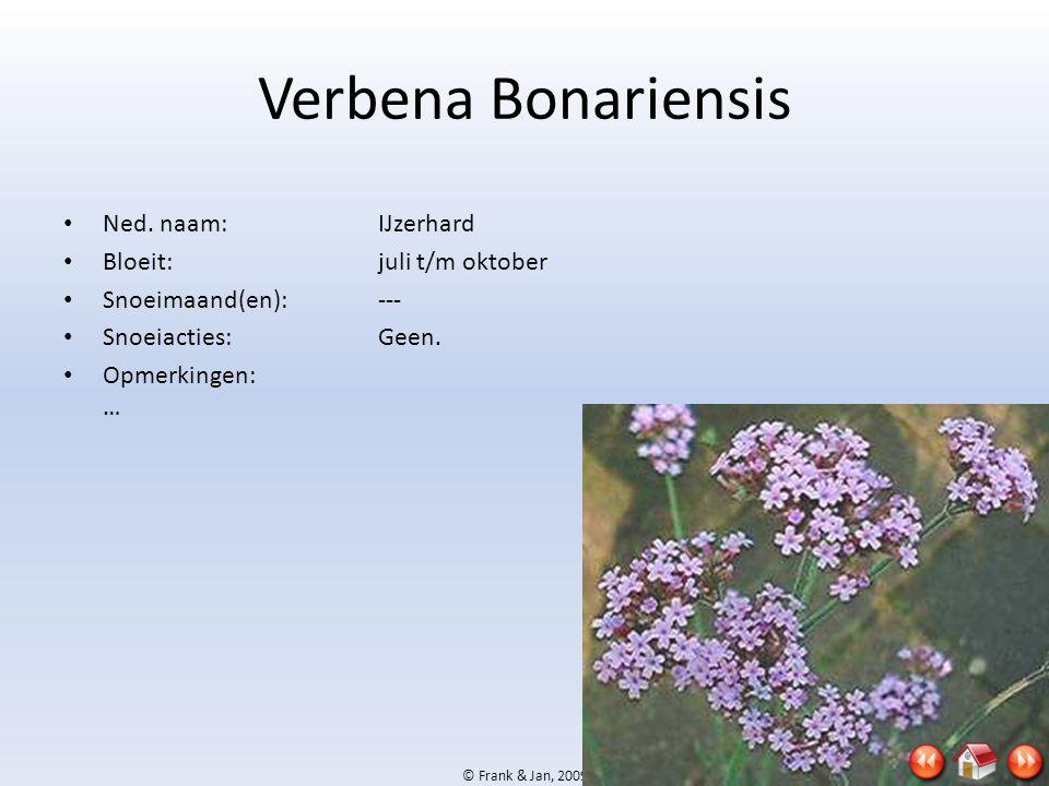 © Frank & Jan, 2009 Verbena Bonariensis • Ned. naam:IJzerhard • Bloeit:juli t/m oktober • Snoeimaand(en):--- • Snoeiacties:Geen. • Opmerkingen: …