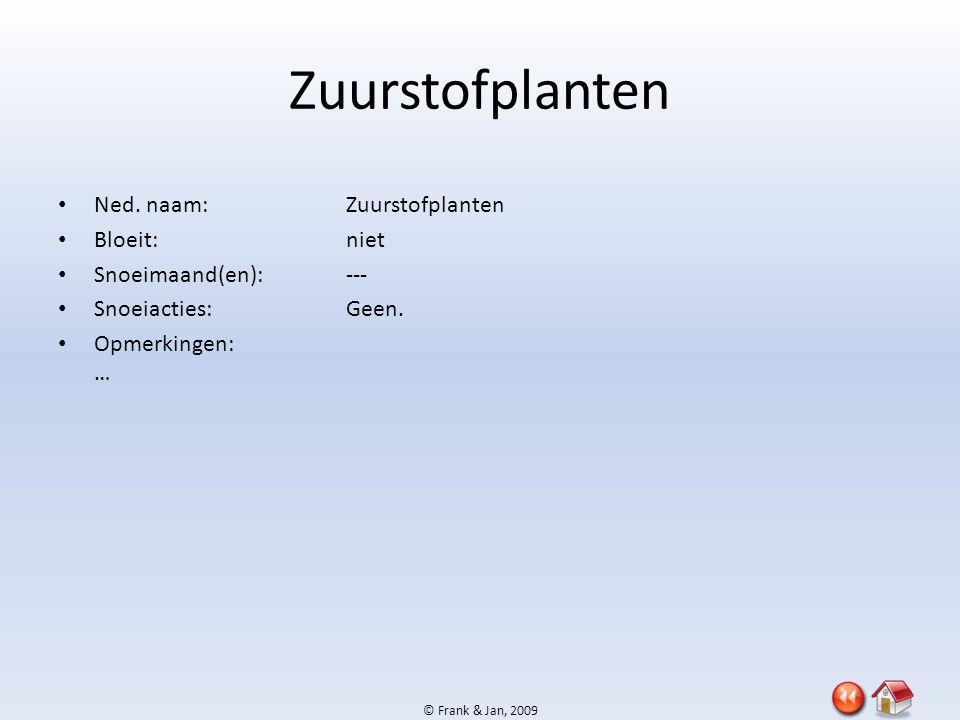 © Frank & Jan, 2009 Zuurstofplanten • Ned. naam:Zuurstofplanten • Bloeit:niet • Snoeimaand(en):--- • Snoeiacties:Geen. • Opmerkingen: …