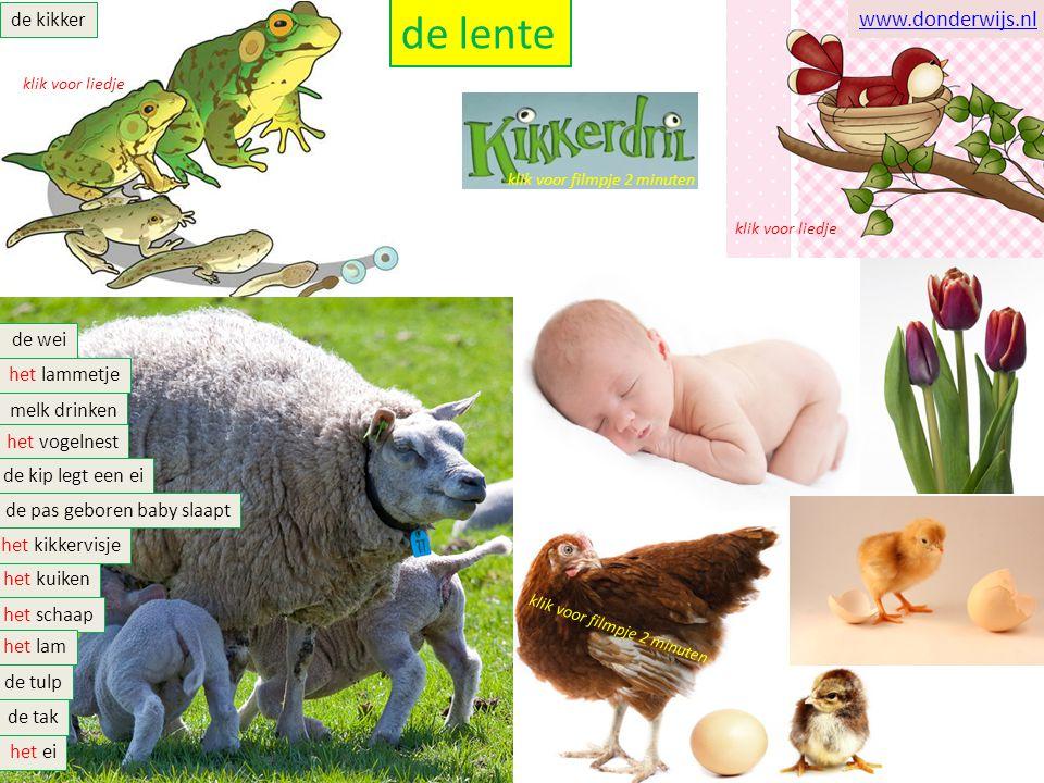 de lente de kikker het schaap het lam het lammetje melk drinken de wei de pas geboren baby slaapt de tulp het vogelnest het kuiken het ei de kip legt