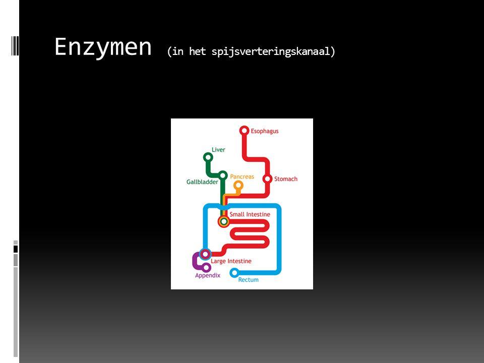 Enzymen:  Processen verlopen vaak langzaam, enzymen versnellen dit proces  Enzymen breken stoffen af tot kleinere stoffen die kunnen worden opgenomen door de wand van de dunne darm  vaak te herkennen aan de uitgang 'ase' met daarvoor de naam van de stof die het afbreekt; lactase breekt lactose af  link link