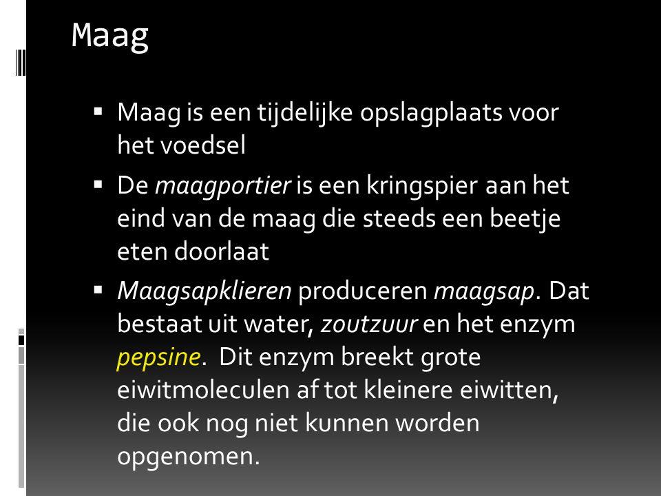 Maag  Maag is een tijdelijke opslagplaats voor het voedsel  De maagportier is een kringspier aan het eind van de maag die steeds een beetje eten doo