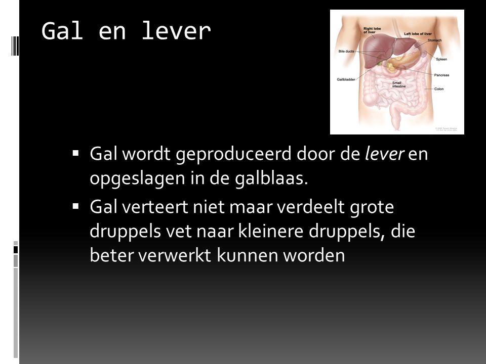 Gal en lever  Gal wordt geproduceerd door de lever en opgeslagen in de galblaas.  Gal verteert niet maar verdeelt grote druppels vet naar kleinere d