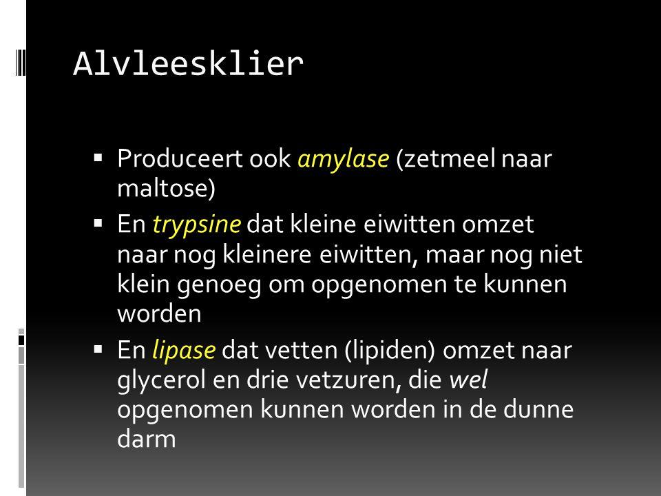 Alvleesklier  Produceert ook amylase (zetmeel naar maltose)  En trypsine dat kleine eiwitten omzet naar nog kleinere eiwitten, maar nog niet klein g