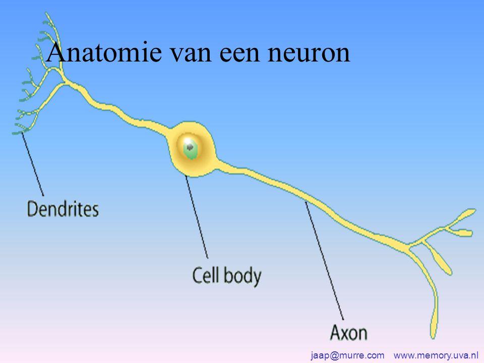 jaap@murre.com www.memory.uva.nl Het geheugen is opgeslagen in de verbindingen (synapsen) tussen de neuronen