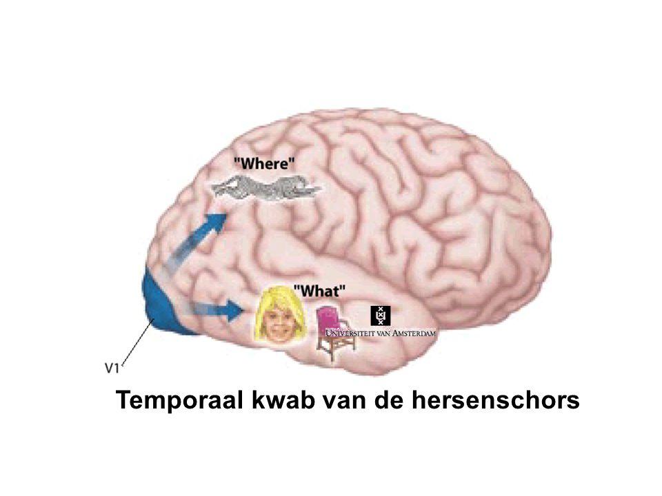 jaap@murre.com www.memory.uva.nl Personen, dieren, en voorwerpen in de temporaalschors