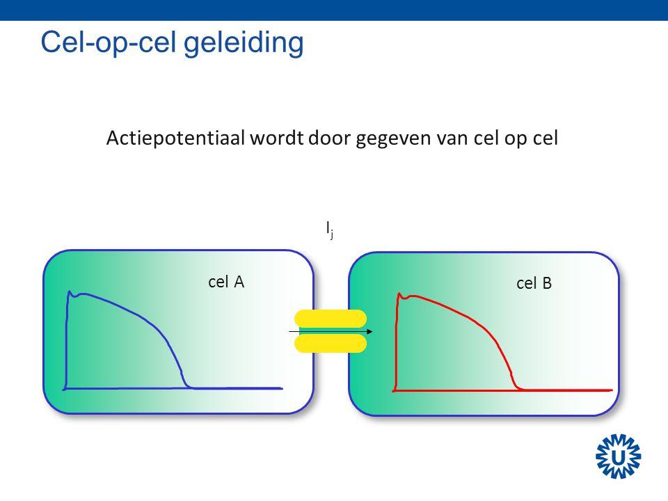 Cel-op-cel geleiding cel A cel B IjIj Actiepotentiaal wordt door gegeven van cel op cel