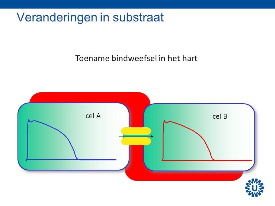Veranderingen in substraat cel A cel B Toename bindweefsel in het hart