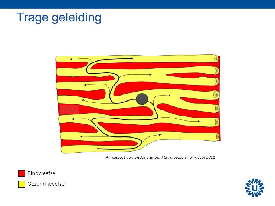 Trage geleiding Bindweefsel Gezond weefsel Aangepast van De Jong et al., J Cardiovasc Pharmacol 2011