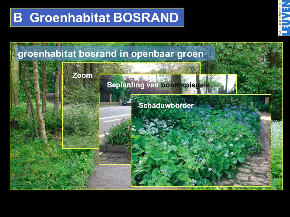 B Groenhabitat BOSRAND bos Zoom Beplanting van boomspiegels Schaduwborder groenhabitat bosrand in openbaar groen