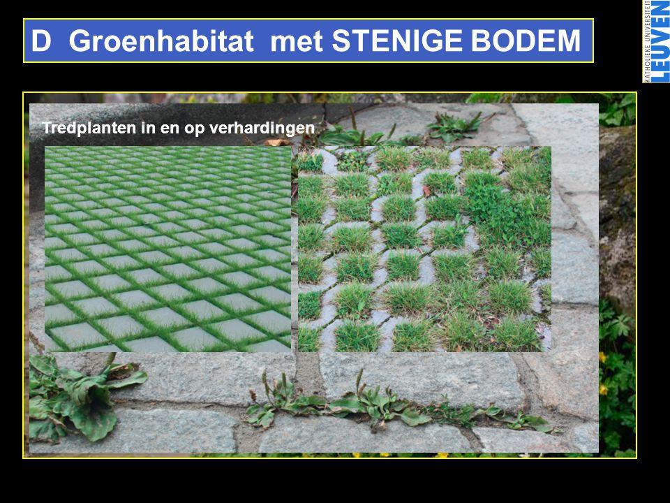 D Groenhabitat met STENIGE BODEM Tredplanten in en op verhardingen