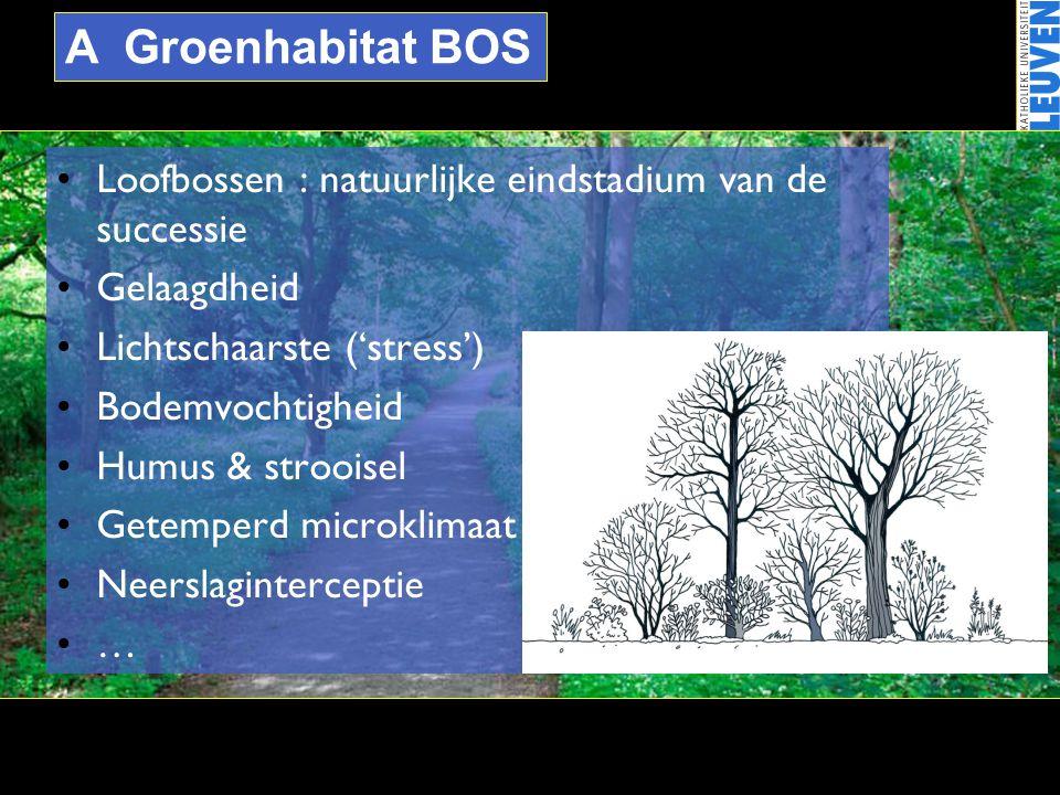 A Groenhabitat BOS •Loofbossen : natuurlijke eindstadium van de successie •Gelaagdheid •Lichtschaarste ('stress') •Bodemvochtigheid •Humus & strooisel