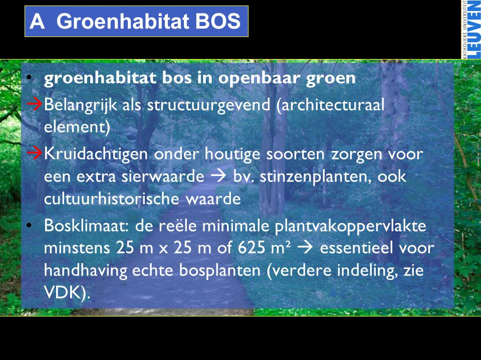 A Groenhabitat BOS •groenhabitat bos in openbaar groen  Belangrijk als structuurgevend (architecturaal element)  Kruidachtigen onder houtige soorten
