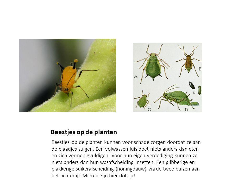 Beestjes op de planten Beestjes op de planten kunnen voor schade zorgen doordat ze aan de blaadjes zuigen.