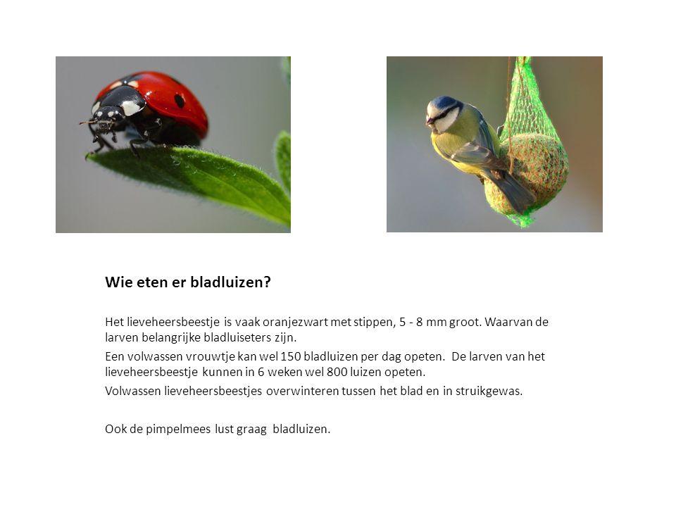 De Mol De regenworm