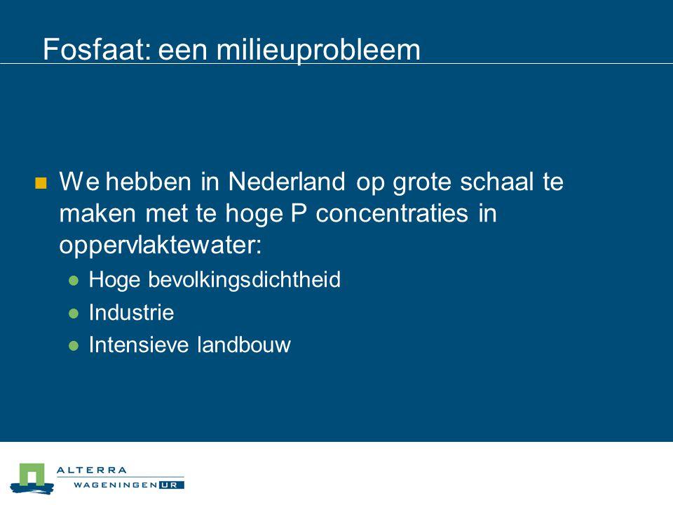 Fosfaat: een milieuprobleem  We hebben in Nederland op grote schaal te maken met te hoge P concentraties in oppervlaktewater:  Hoge bevolkingsdichth