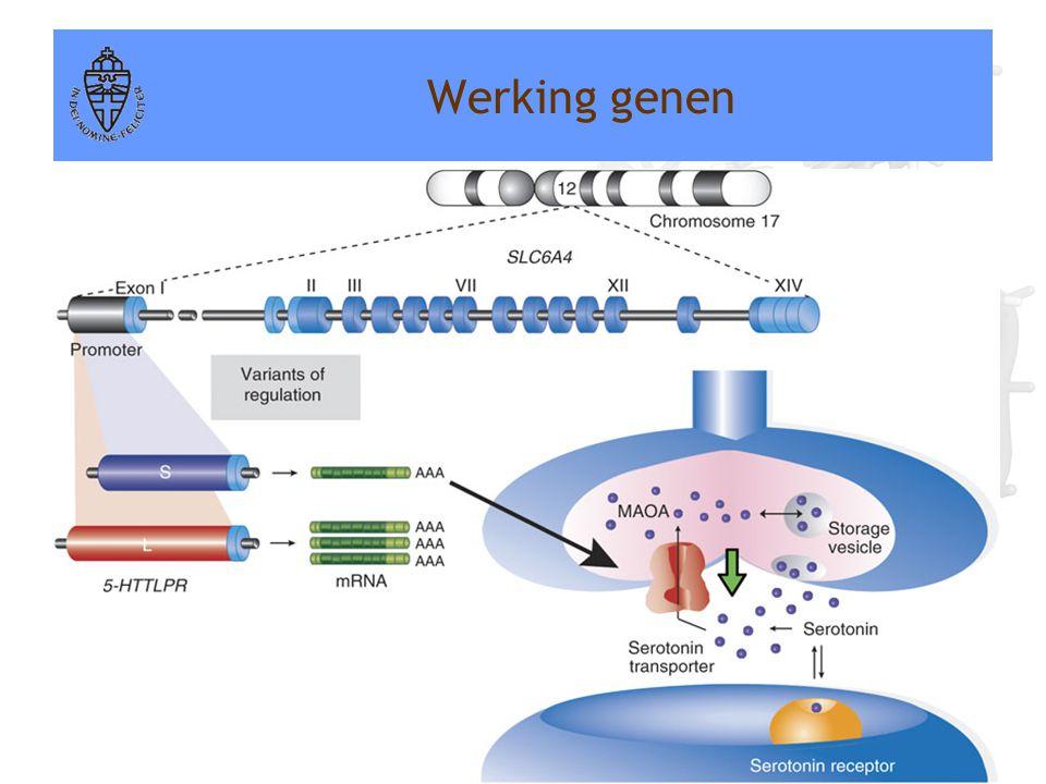 Voorbeeld: Serotonine transporter gen (5-HTTLPR) •2 allelen: kort allel en lang allel •Genotypes: kort-kort, kort-lang of lang-lang •Dragen van tenmin