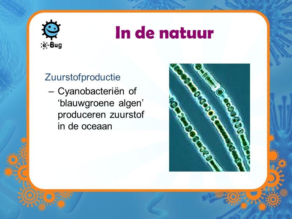 In de natuur Zuurstofproductie –Cyanobacteriën of 'blauwgroene algen' produceren zuurstof in de oceaan