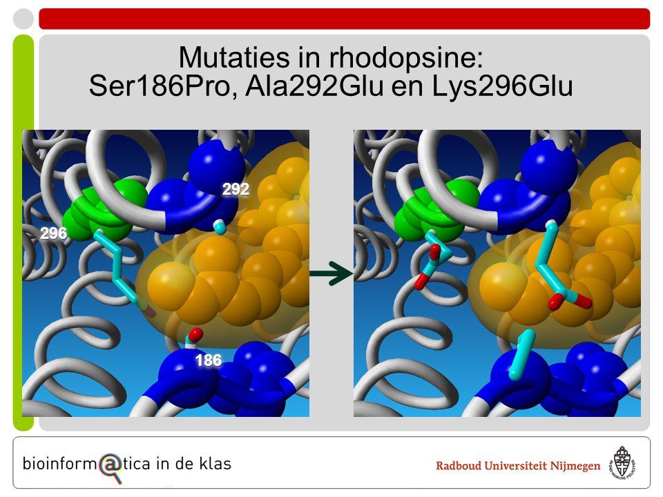 Mutaties in rhodopsine: Ser186Pro, Ala292Glu en Lys296Glu 296296 292292 186186