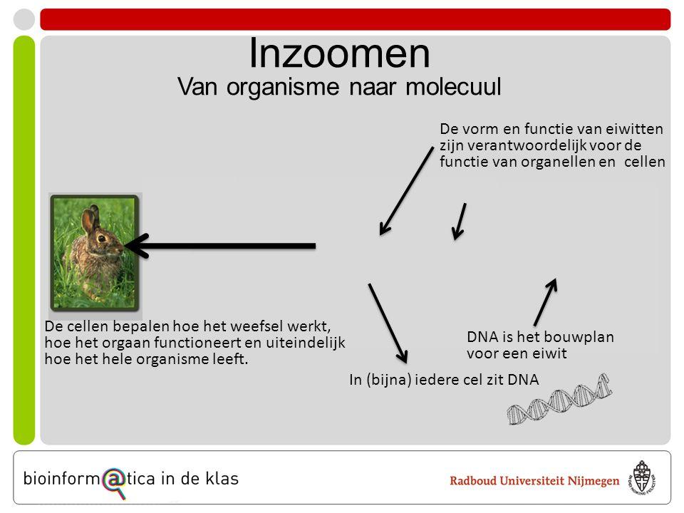 Inzoomen Van organisme naar molecuul In (bijna) iedere cel zit DNA DNA is het bouwplan voor een eiwit De vorm en functie van eiwitten zijn verantwoordelijk voor de functie van organellen en cellen De cellen bepalen hoe het weefsel werkt, hoe het orgaan functioneert en uiteindelijk hoe het hele organisme leeft.