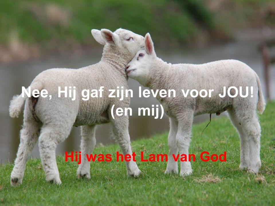 Nee, Hij gaf zijn leven voor JOU! (en mij) Hij was het Lam van God