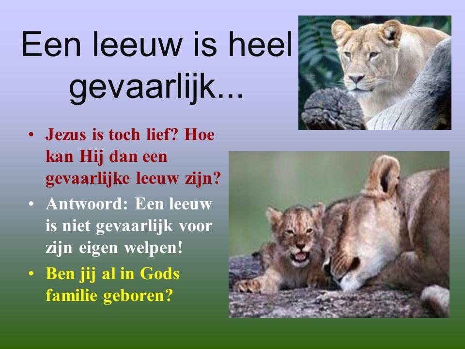 Een leeuw is heel gevaarlijk...•J•Jezus is toch lief.
